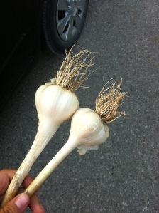 Carere Garlic